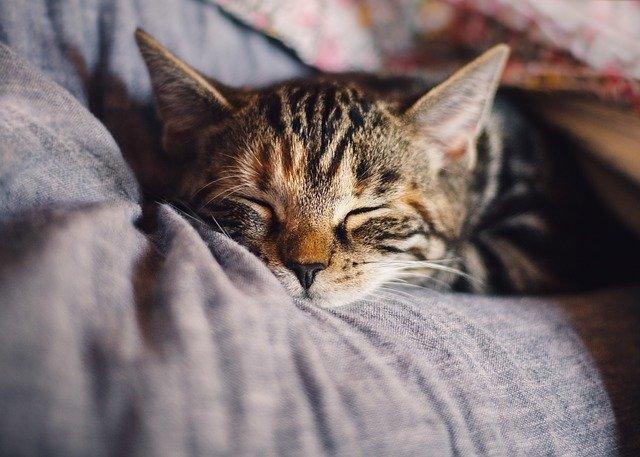 Tidak memiliki waktu yang cukup untuk istirahat