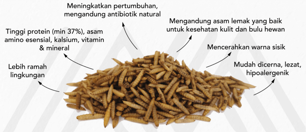 manfaat larva bsf magalarva